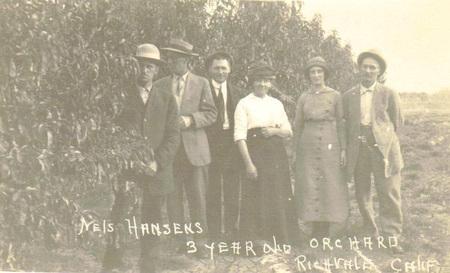 Hansen_orchard_richvale_crop