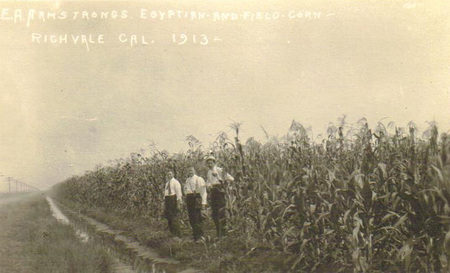 Richvale_corn_crop