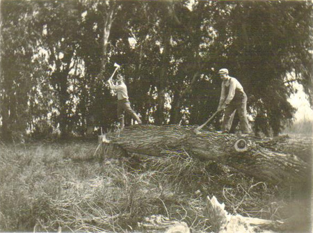 Chopping_wood_crop